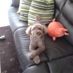 飼い犬に見張られるの巻 in Japan