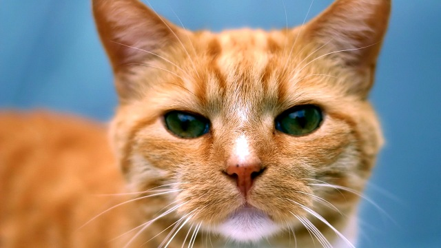 ginger-cat-221527