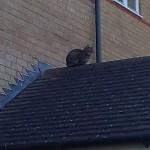 6時間ずーっと屋根の上の猫