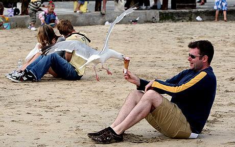 Seagull1_1467267c