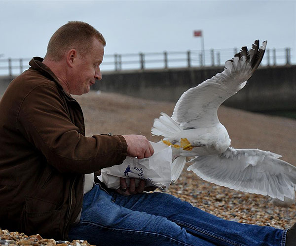 seagull-and-chips-2