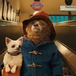 実写版映画くまの『パディントン』が日本で公開決定!